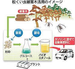 松くい虫被害木からバイオ燃料.jpg